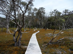 Cradle Mountain Path