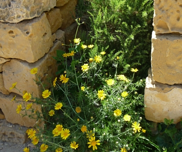 Sandstone and Wild Flowers